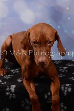 M&N Photography -DSC_7032