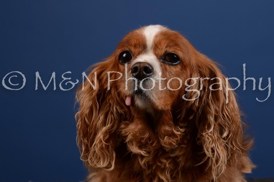 M&N Photography -DSC_5169
