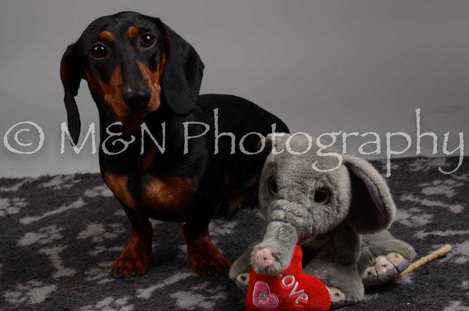 M&N Photography -DSC_2870