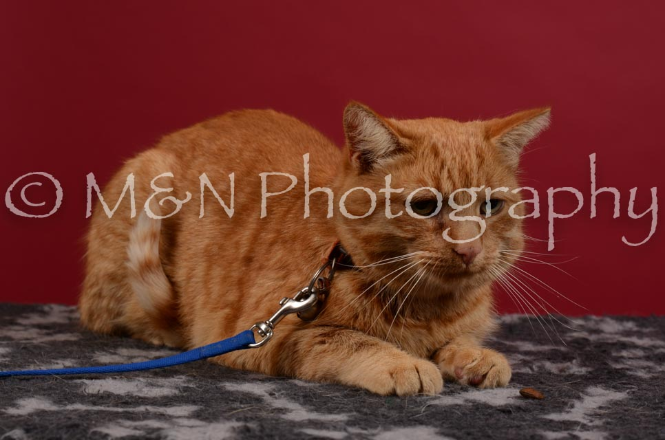 M&N Photography -DSC_3444