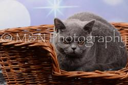 M&N Photography -DSC_7012