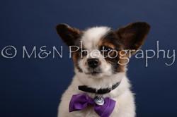 M&N Photography -DSC_3925