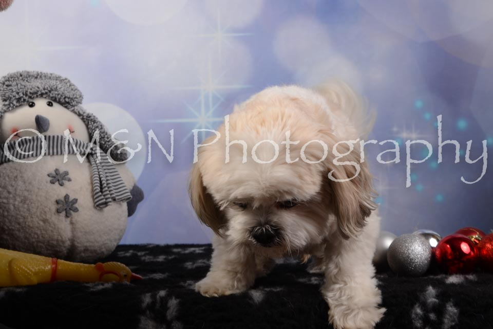 M&N Photography -DSC_6493