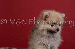 M&N Photography -DSC_3414