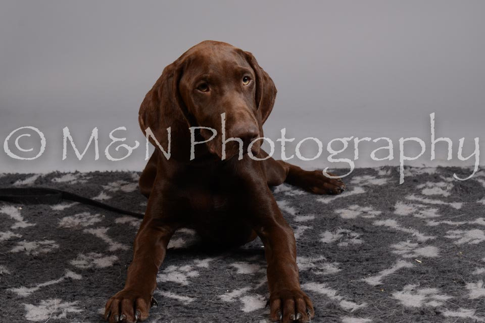 M&N Photography -DSC_2608