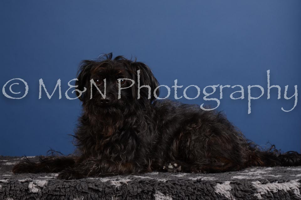 M&N Photography -DSC_4997