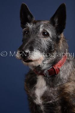 M&N Photography -DSC_3884
