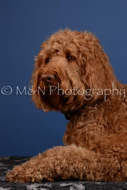 M&N Photography -DSC_4964