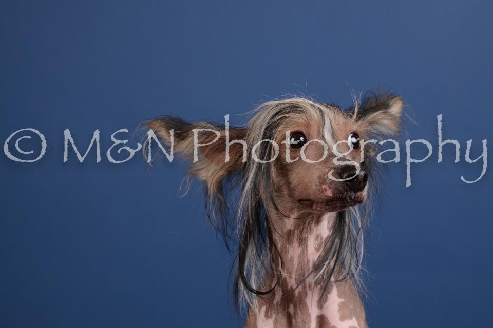 M&N Photography -DSC_5185