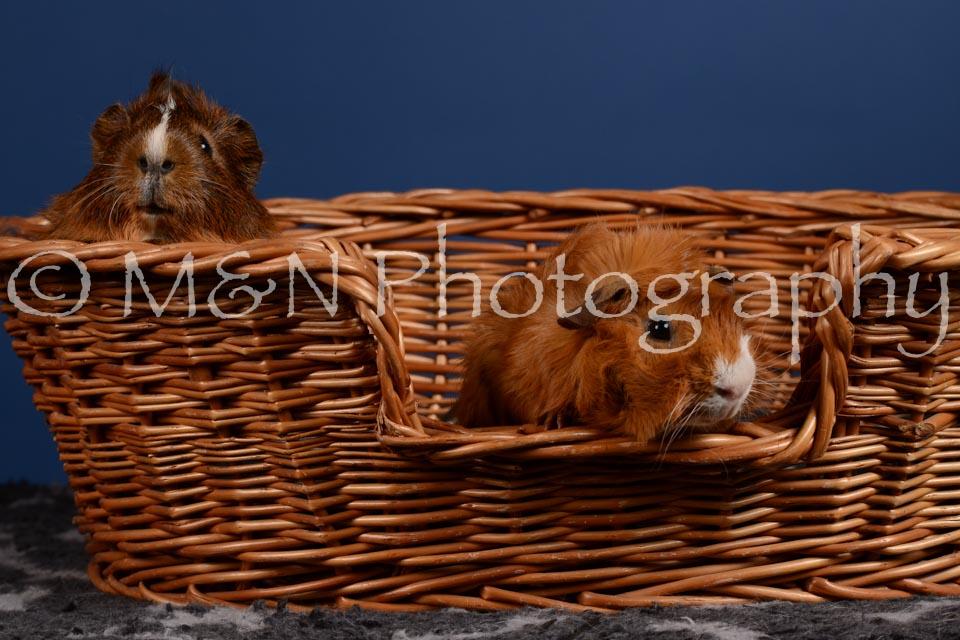 M&N Photography -DSC_5092