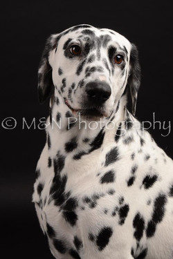 M&N Photography -DSC_9623