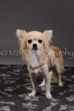 M&N Photography -DSC_2220