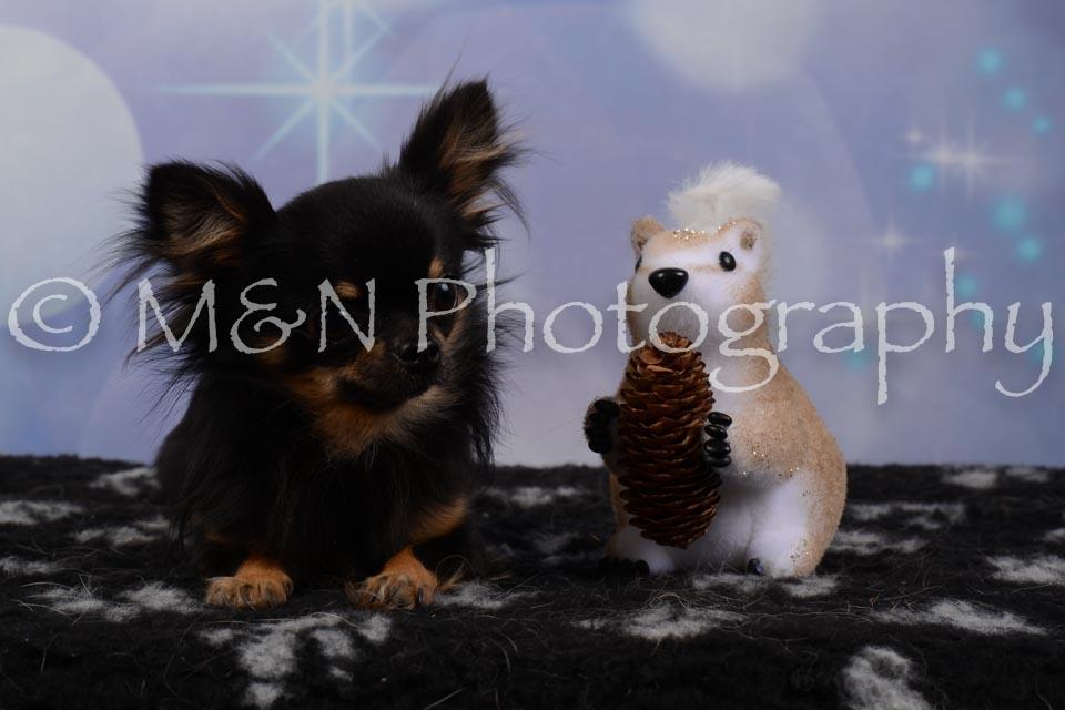 M&N Photography -DSC_6789
