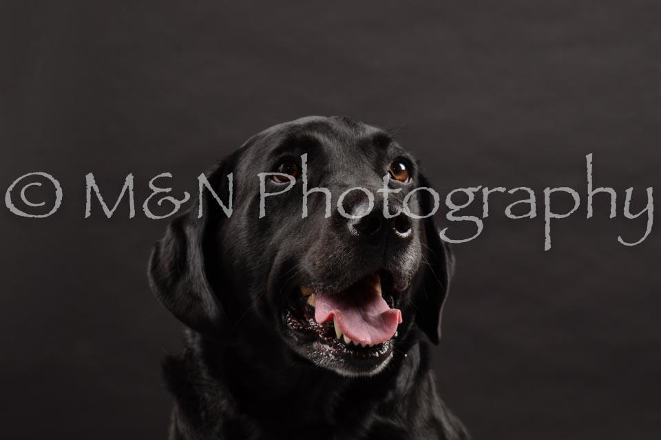 M&N Photography -DSC_0018