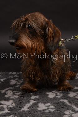 M&N Photography -DSC_9995