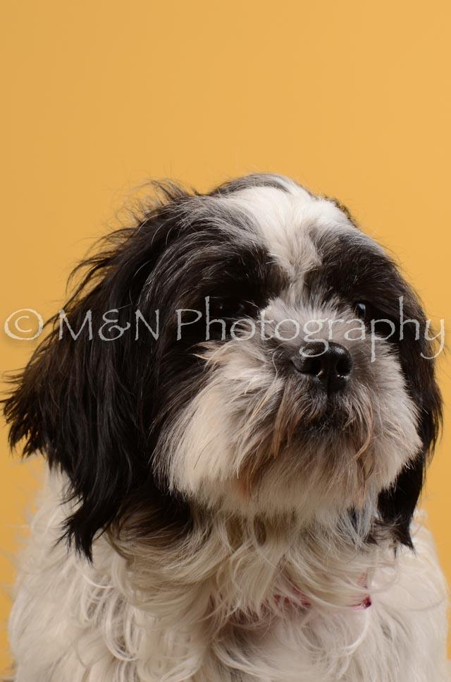 M&N Photography -DSC_4700