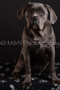 M&N Photography -DSC_5582