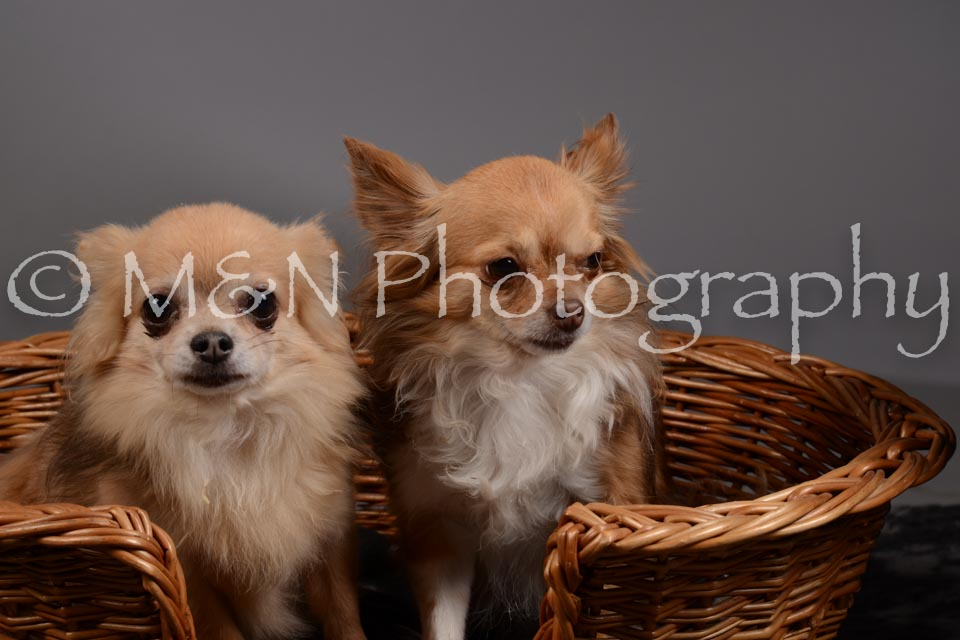 M&N Photography -DSC_1823