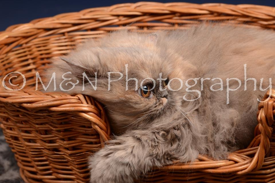 M&N Photography -DSC_0514
