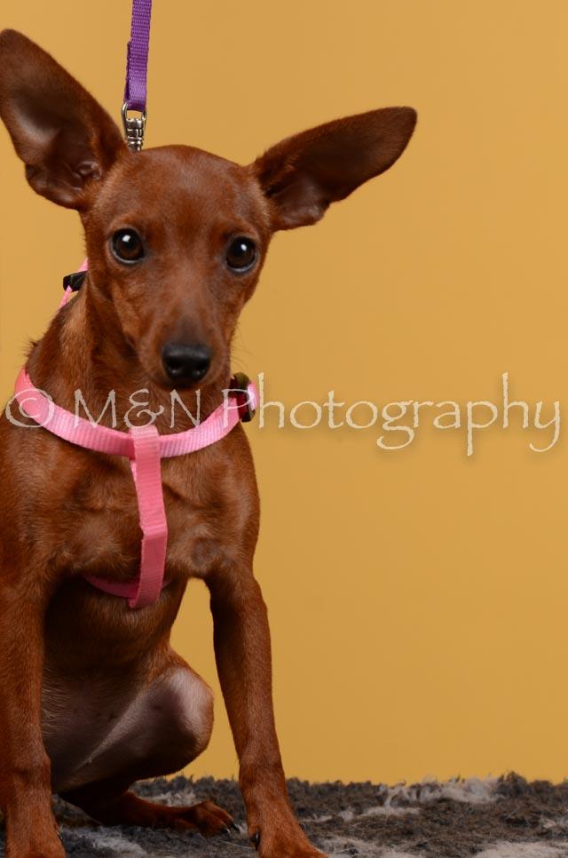 M&N Photography -DSC_4602