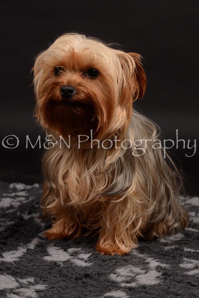 M&N Photography -DSC_9701