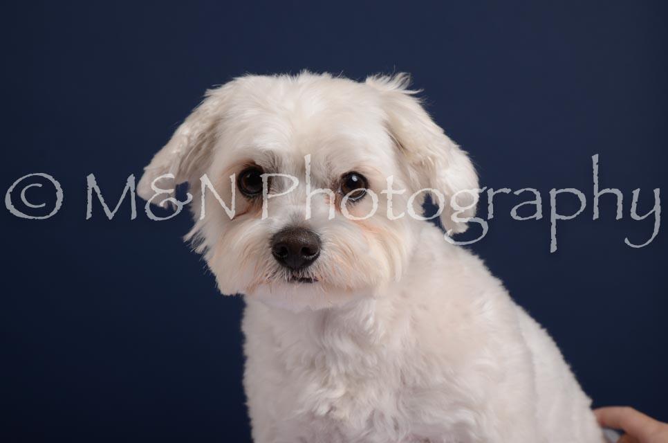 M&N Photography -DSC_4194