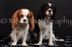M&N Photography -DSC_5432