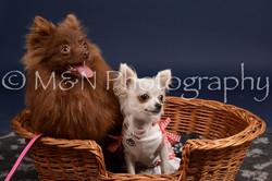 M&N Photography -DSC_0447