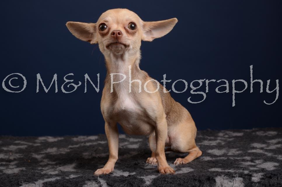 M&N Photography -DSC_4206