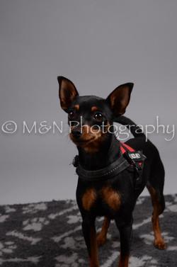 M&N Photography -DSC_2779
