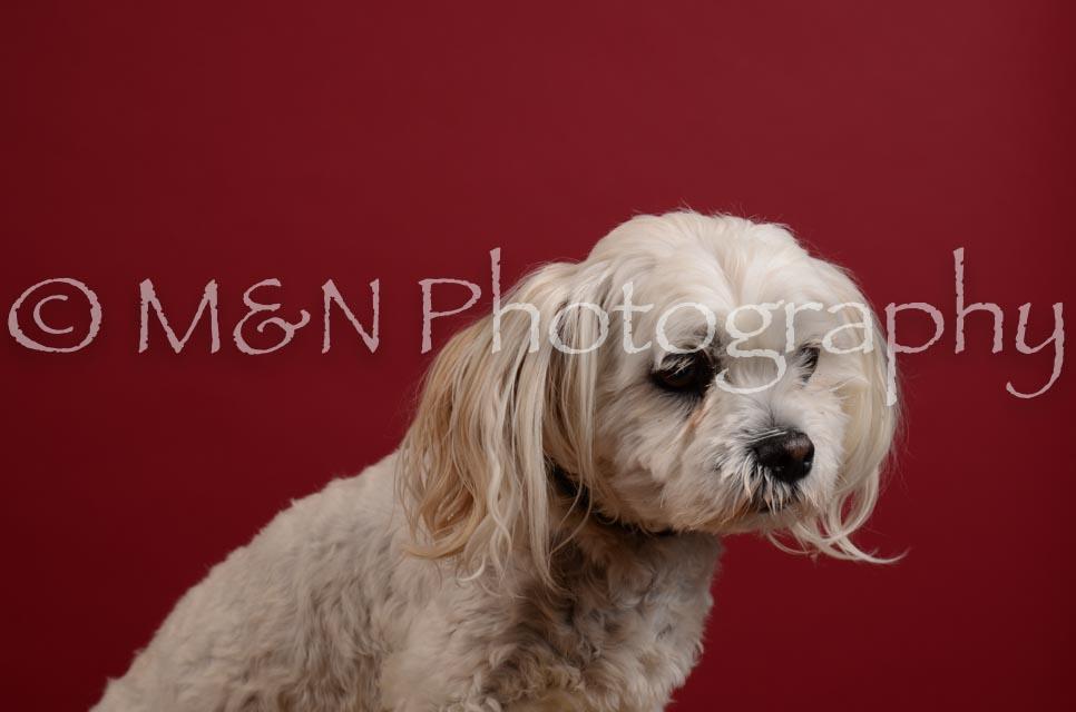 M&N Photography -DSC_3585
