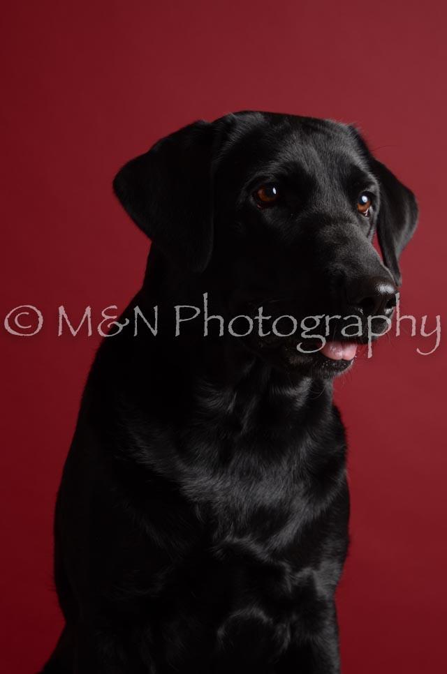 M&N Photography -DSC_3155