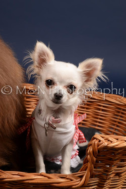 M&N Photography -DSC_0452