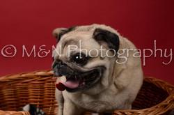 M&N Photography -DSC_6854