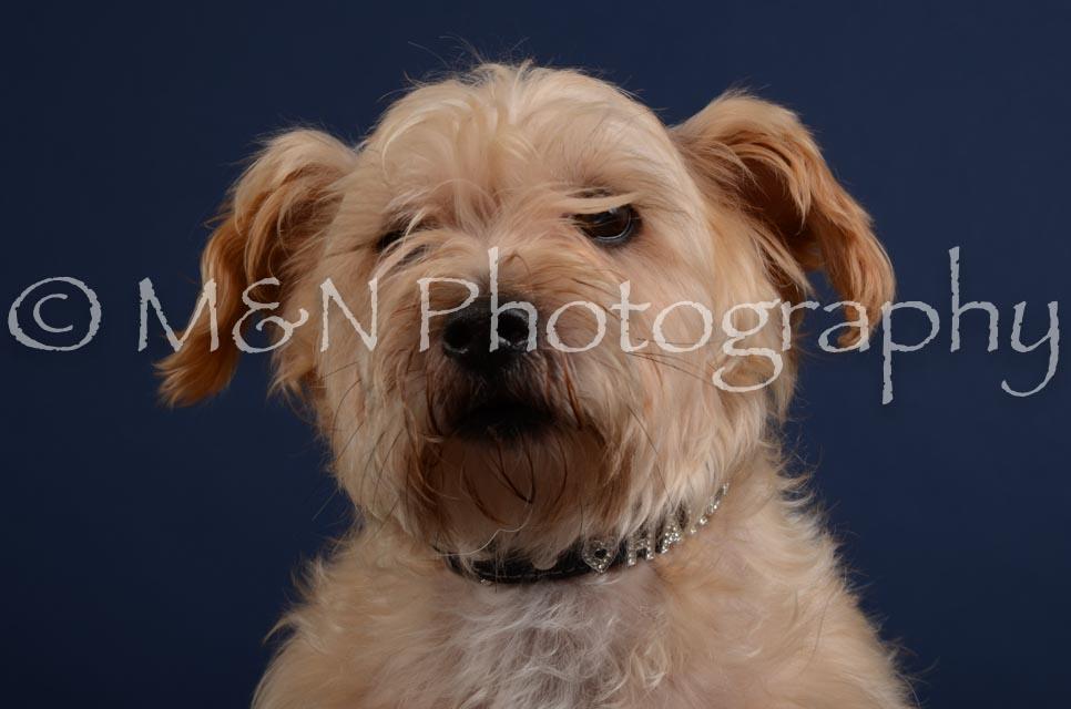 M&N Photography -DSC_3851