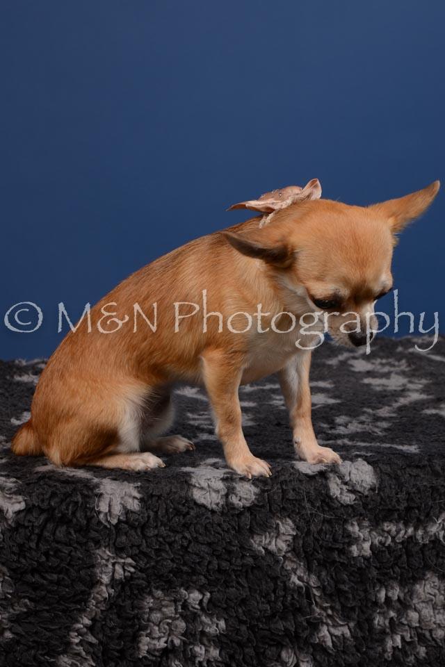 M&N Photography -DSC_5291