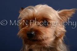 M&N Photography -DSC_4114