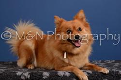 M&N Photography -DSC_5375