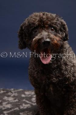 M&N Photography -DSC_0530