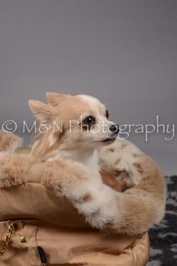 M&N Photography -DSC_1646