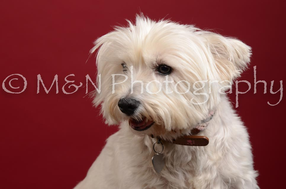 M&N Photography -DSC_3570