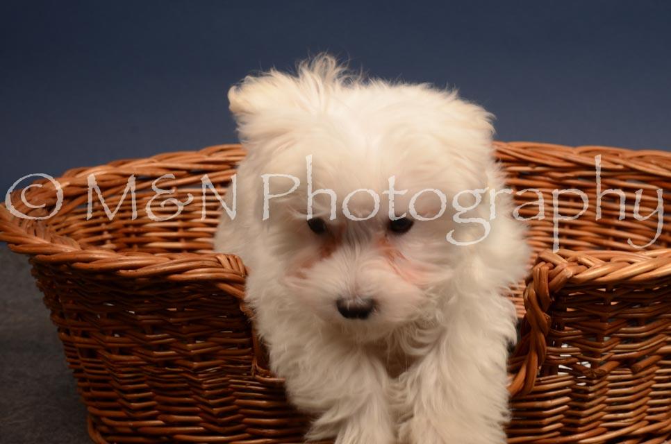 M&N Photography -DSC_4408