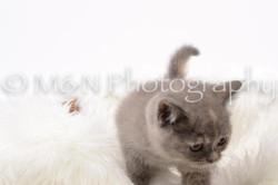 M&N Photography -DSC_8841