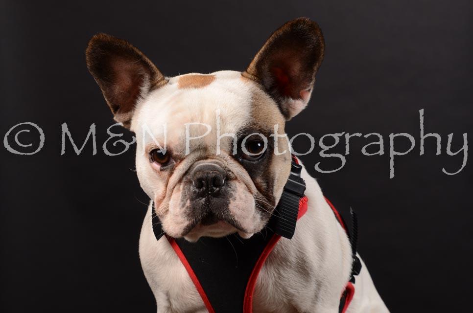 M&N Photography -DSC_5947