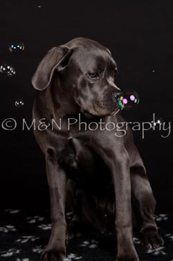 M&N Photography -DSC_5588