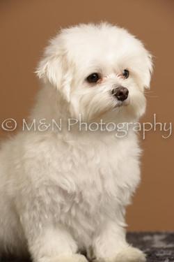 M&N Photography -_SNB0655