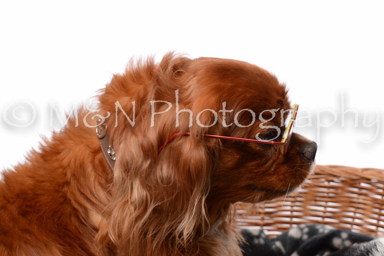 M&N Photography -DSC_8716