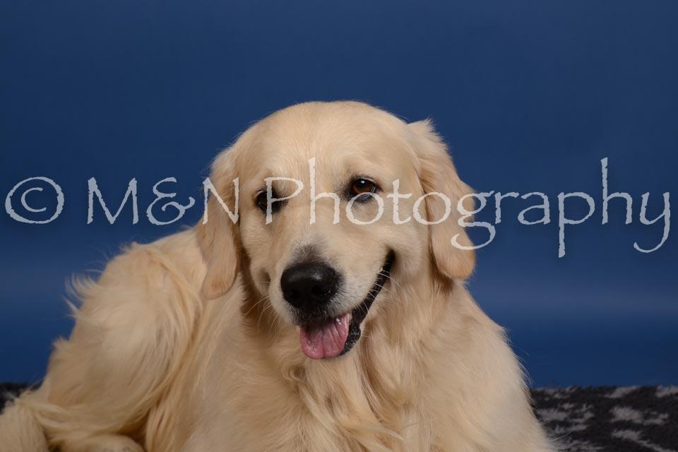M&N Photography -DSC_5284