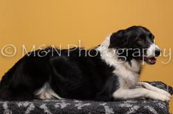 M&N Photography -DSC_4528