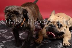 M&N Photography -DSC_8503